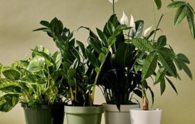 رشد گیاهان